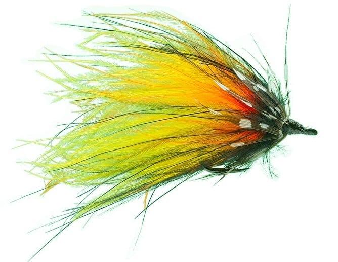 Cascade (Ally's Shrimp)