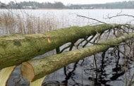 Fældede træer giver skjul til småfisk