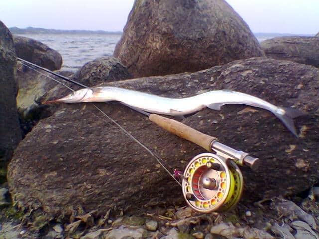 Hornfiskeri sæson