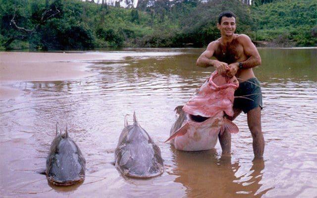 Den største af fiskene på billedet vejer over 140 kilo
